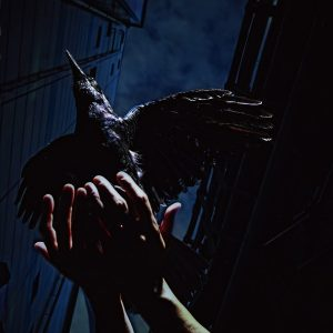Download 9mm Parabellum Bullet - Cold Edge e.p [Mini Album]